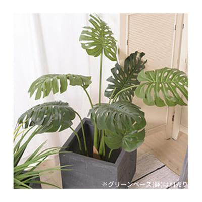 エキゾチックで個性的な葉を持つモンステラ/フェイクグリーン